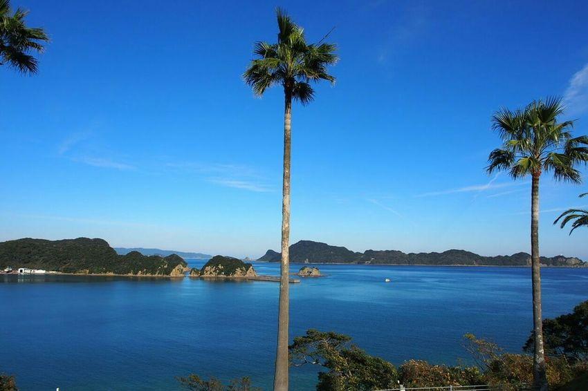 日南市 Palm Tree Tropical Climate Water Landscape Travel Destinations Beauty In Nature KYUSHU