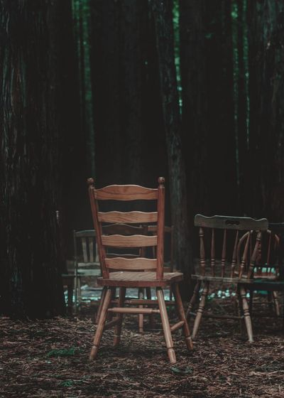Empty chairs and trees on field in forest
