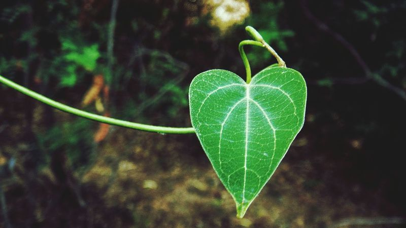 beauty view of a leaf Tnphotographer Visionofpictures Blr_photography_hub Picoftheday Chennaiphotographer Sjnclicks MotivationalQuotes Quotesforlife Leaf Leaves Greenery Macrophotography Macarons Indianphotography Inspiration Naturephotography Nature Macro Macros Macroworld_tr