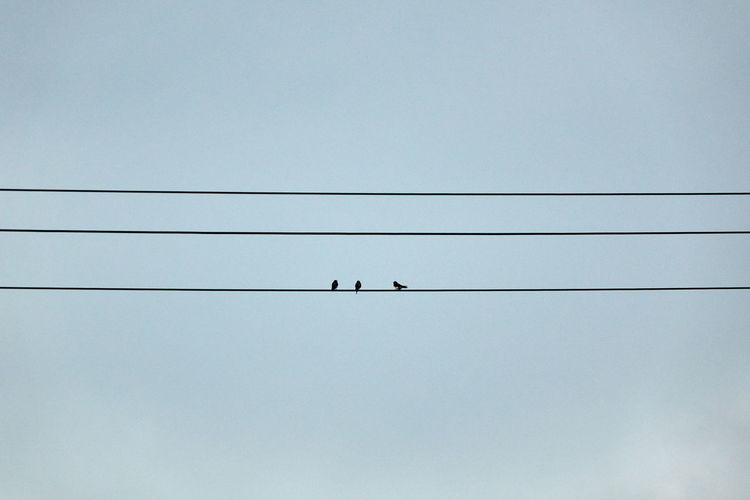 Abstract Animal Themes Animals In The Wild Beauty In Nature Bird Birds Cable Clear Sky Connection Copy Space Day Electricity  Low Angle View Nature No People Outdoors Perching Power Line  Power Supply Sky Technology