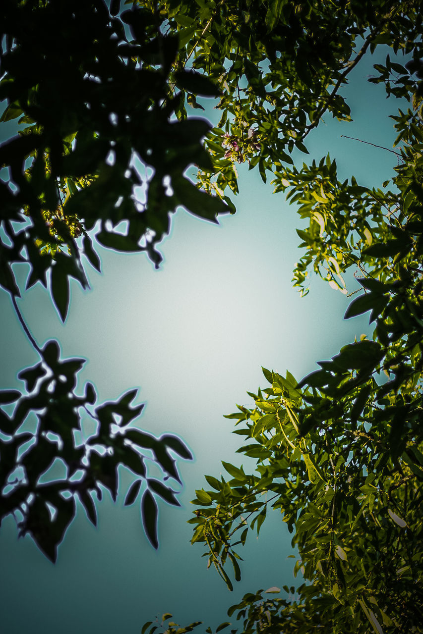 tree, leaf, nature, beauty in nature, low angle view, day, growth, branch, no people, clear sky, outdoors, sky, scenics, freshness