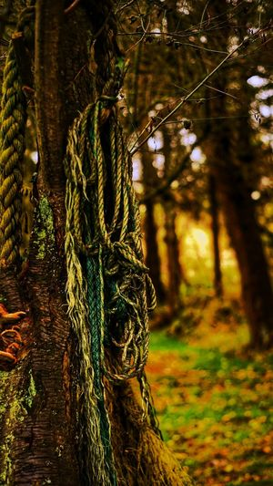 Lost Ropes Outdoors Nature No People Day Sunlight Forest Tree Growth Beauty In Nature Ropes First Eyeem Photo Lost In The Landscape