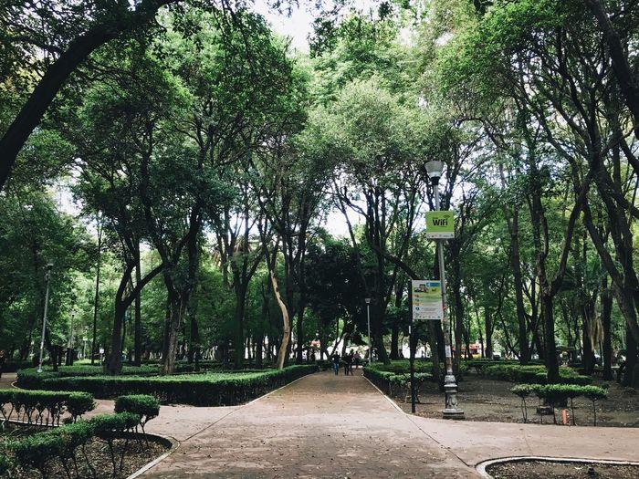 Walkway amidst trees in park