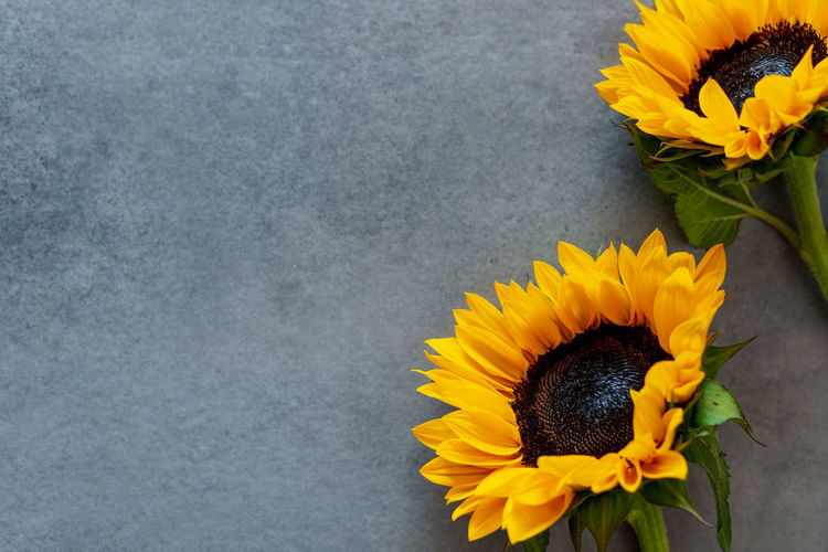 High angle view of yellow sunflower