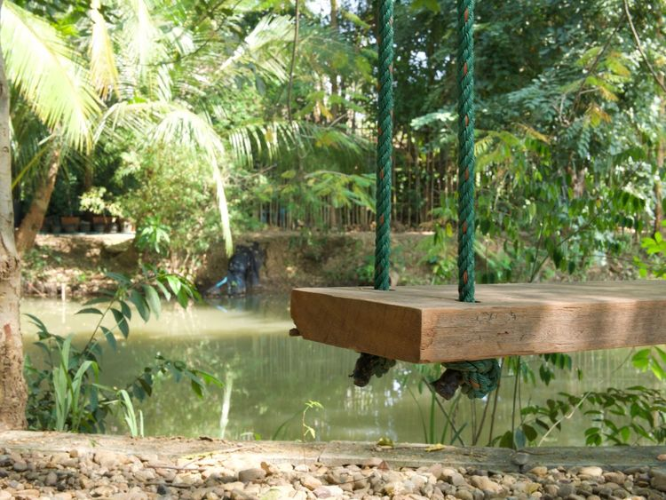 vintage wooden swing hanging by nylon rope on the big Rain tree surrounded by tropical garden view Holiday Natural Light Play Time Rain Tree Travel Trip Asian Style Conical Hat Back To Basics  Basically Beauty In Nature Coconut Tree Day Kid Nature No People Outdoors Palm Tree Poolside Relaxing Time Retro Style Tree Tropical Gardens Water Wood - Material Wooden Swing