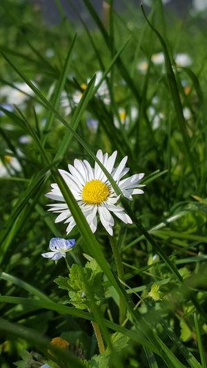Beautiful Flower ,