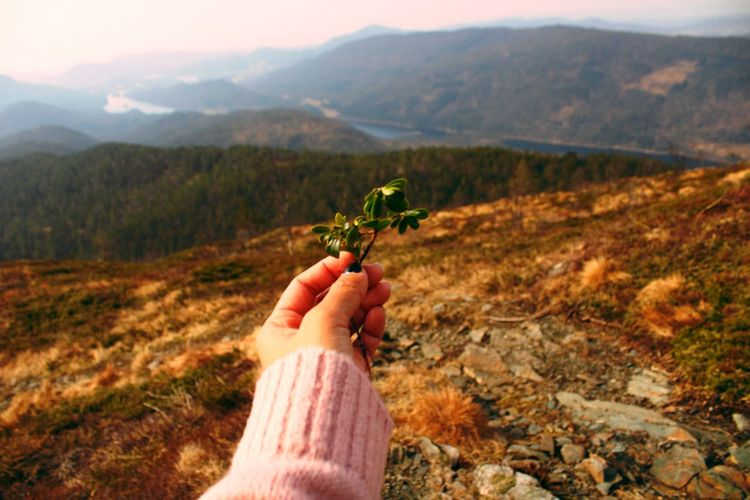 Close-up of hand holding plant against mountain range