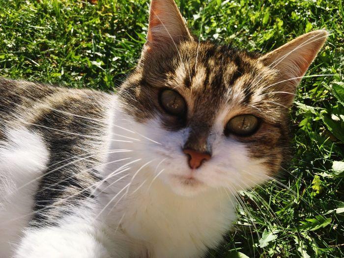 Cat Sun Grass Nature Animals France First Eyeem Photo