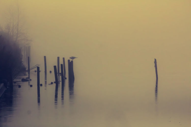 Misty Day Fog
