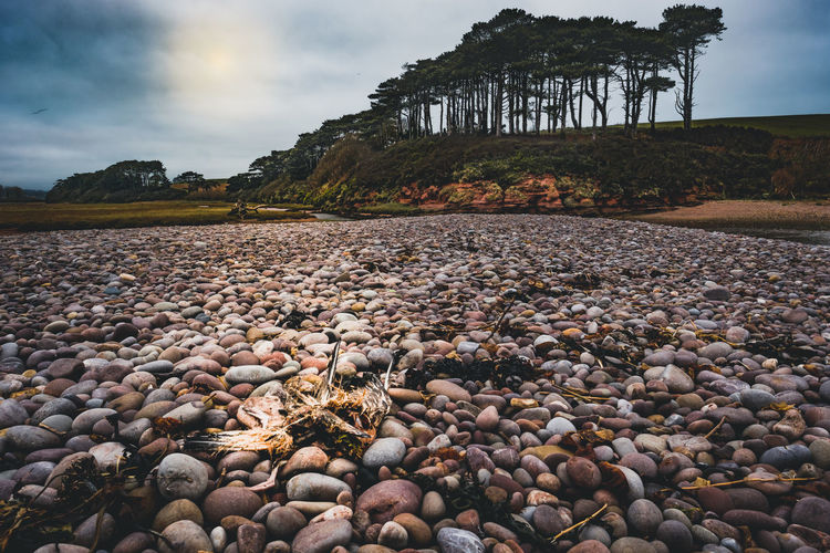Budleigh Salterton Budleigh Salterton Beach Beachphotography Beauty In Nature Cloud - Sky Day Mountain Nature No People Outdoors Pebble Pebble Beach Rock - Object Scenics Sea Seascape Shore Sky Stone - Object Tranquil Scene Water