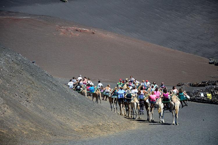 Riding camel Camel Camel Riding Camello Contrast Desert Desert Beauty KIOMI Kiomi Collection Lanzarote Lanzarote Island Lanzarote-Canarias The KIOMI Collection Fresh On Eyeem  The Great Outdoors - 2016 EyeEm Awards