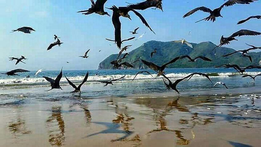 Beachphotography Bird Photography Sunshine Life Is A Beach Beach