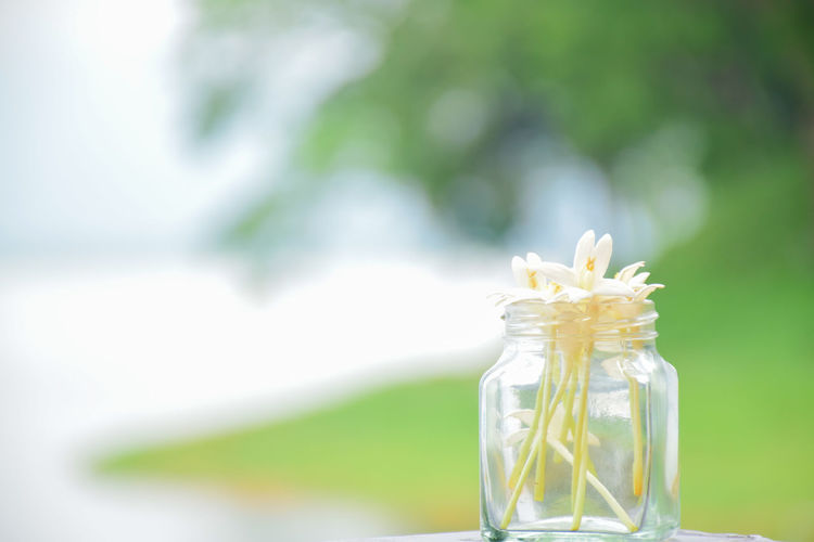 Close-up of white flower in glass