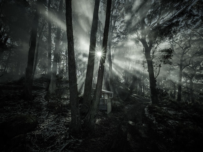 Light Rays in the Woods Misty Beauty In Nature Blackandwhite Brightly Lit Forest Forest Trees Lens Flare Monochrome Nature No People Non-urban Scene Outdoors Plant Scenics - Nature Sun Sunbeam Sunlight Tranquil Scene Tranquility Tree Tree Trunk WoodLand EyeEmNewHere The Great Outdoors - 2018 EyeEm Awards