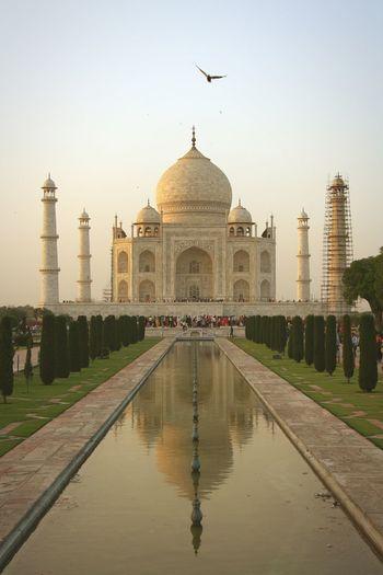 Taj Mahal Architecture Reflection Bird Travel Destinations Lovestory Inspiring Magical Places India Travel Photography