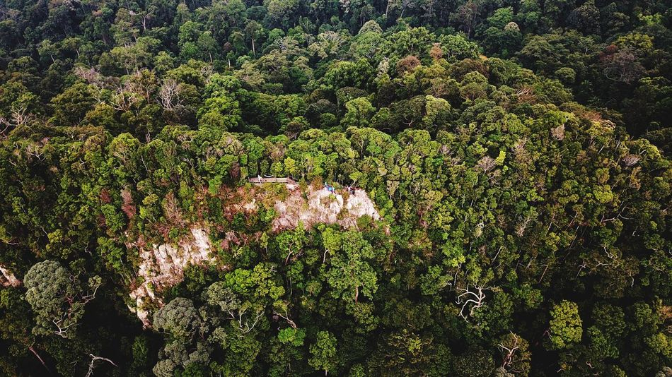 Mount Arong Aerial View Aerialphotography EyeEm Selects Eyebird Topdown Mavicpro Mersing Plant Growth High Angle View Full Frame No People Green Color Nature Day Backgrounds Tree Outdoors Land Sunlight Beauty In Nature Field Grass Abundance Tranquility Lush Foliage Foliage