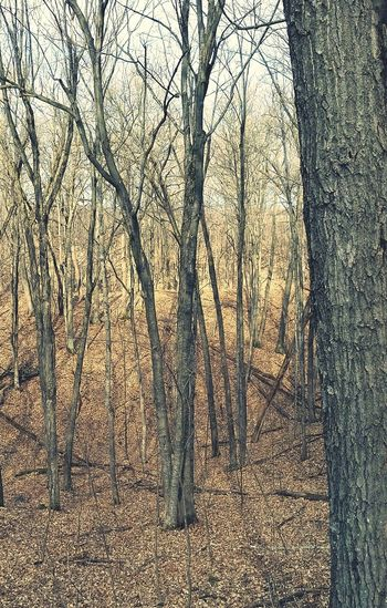 Exploring New Ground Shadows.  Glacial Hills Wisconsin, Kettle Moraine A Walk In The Woods