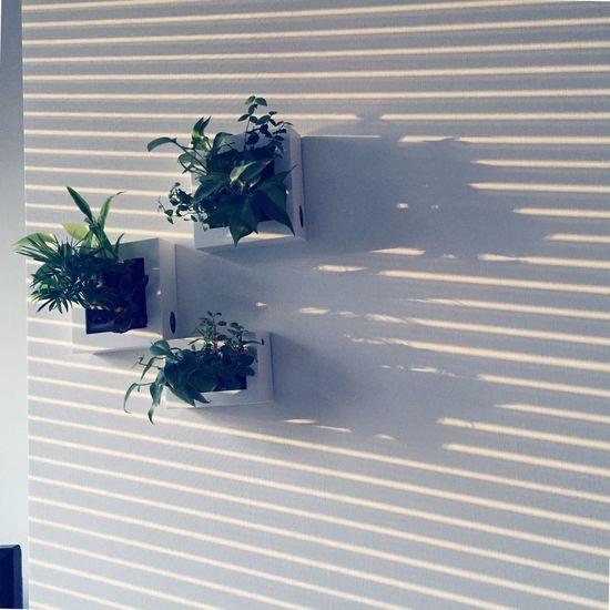 Sun Sunset Plants Interior Design AMPt - Stripes Shades