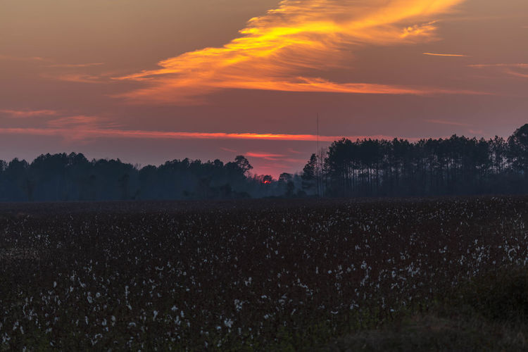 Sunset Over a Cotton Field Clouds Colors Cotton Field Orange Red Sky Sunset Trees Woods