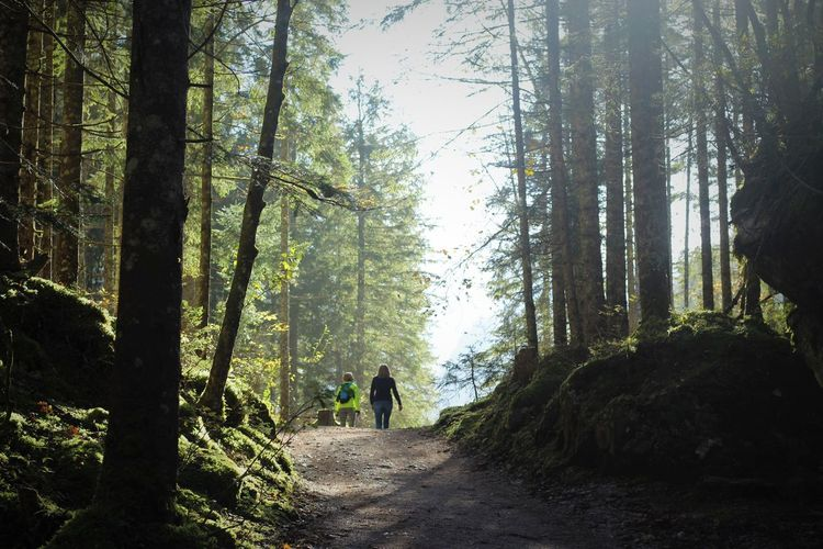 Rear view of people walking amidst trees in forest