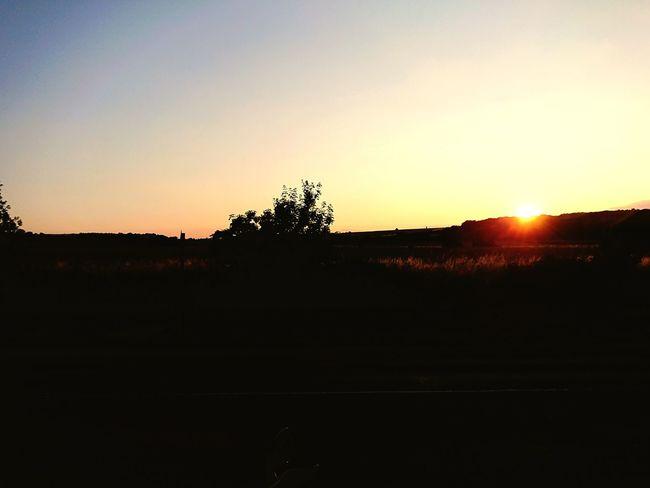 Tree Sunset Clear Sky Silhouette Sky Landscape