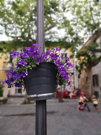 La perfezione dell'imperfezione Vip Digireale Lights And Shadows Italy Cilento Flower Purple Close-up Blooming Fragility Single Flower In Bloom Plant Life Botany Blossom Petal