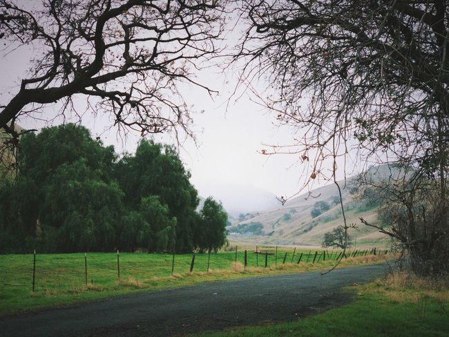 """""""Follow The Fog"""" A country road through rolling California hills, shrouded by fog in the distance, makes for a mysterious adventure. Trees California Rolling Hills Mystery Country Road Foggy Day Foggy Fog Tree Beauty In Nature Landscape Nature Green Color Scenics - Nature Road"""