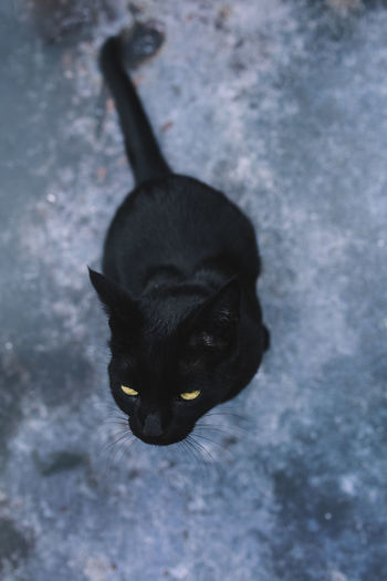High angle portrait of black cat