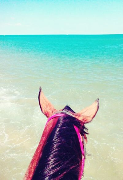Break The Mold Sea Horizon Over Water One Animal Rear View Animal Themes Nature Mammal Water Day No People Domestic Animals Beauty In Nature Outdoors Sky Close-up Horse Horse Riding Horse Photography  Ears Live For The Story