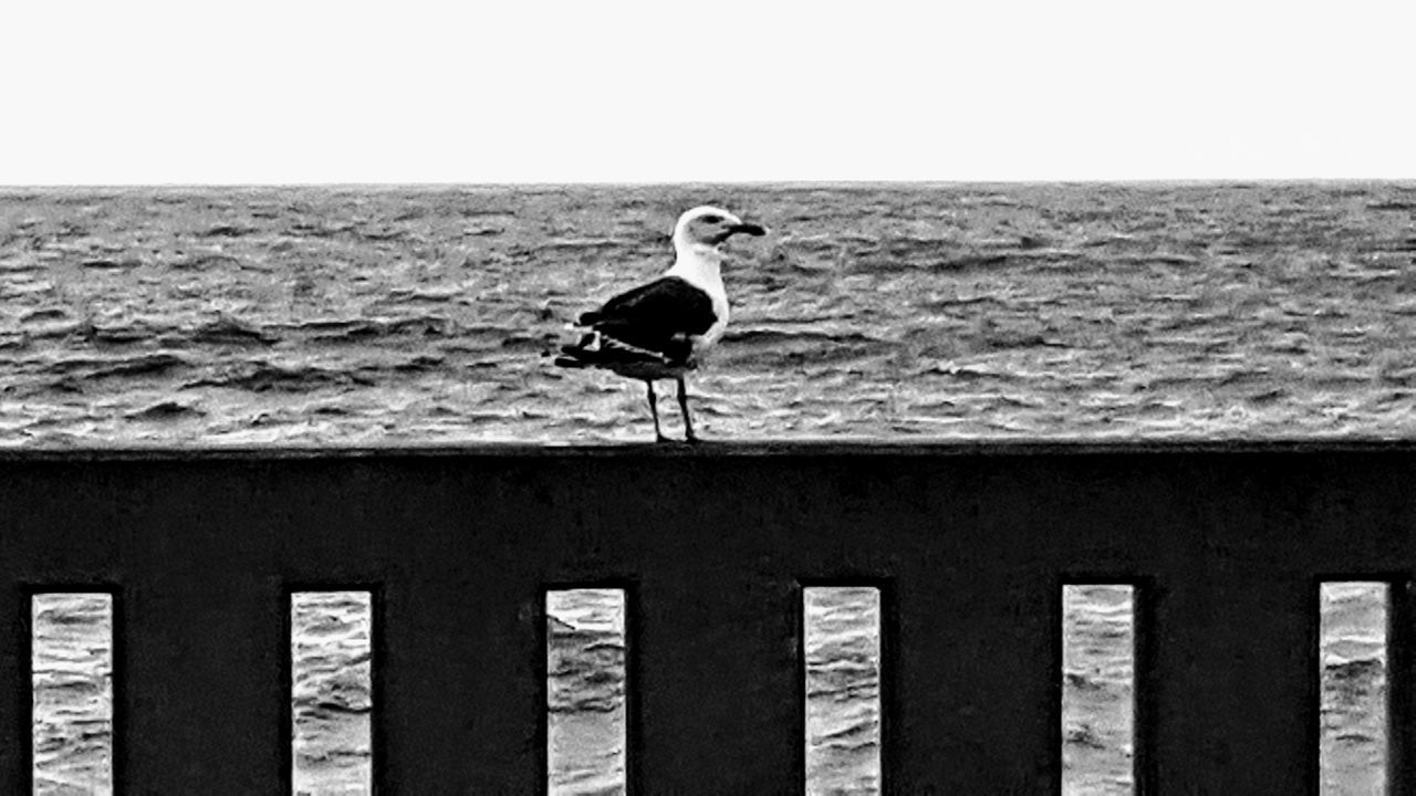 Sea Bird One Animal Animals In The Wild Animal Themes Beach Animal Wildlife Outdoors Day Horizon Over Water Water Clear Sky Full Length Stork Perching Nature No People Wrightsville Beach NC Johnny Mercer's Pier Storm Cloud Wrightsville Beach Sea Life Wave Cloud - SkySky