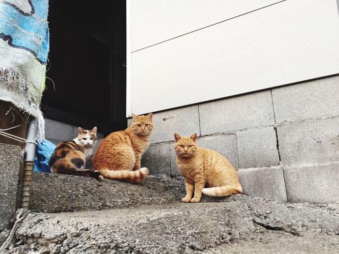 尾道(Onomichi) Onomichi Onomichi, Japan Domestic Cat Domestic Animals Pets No People Looking At Camera Cat♡ Cat Lovers Travel Photography