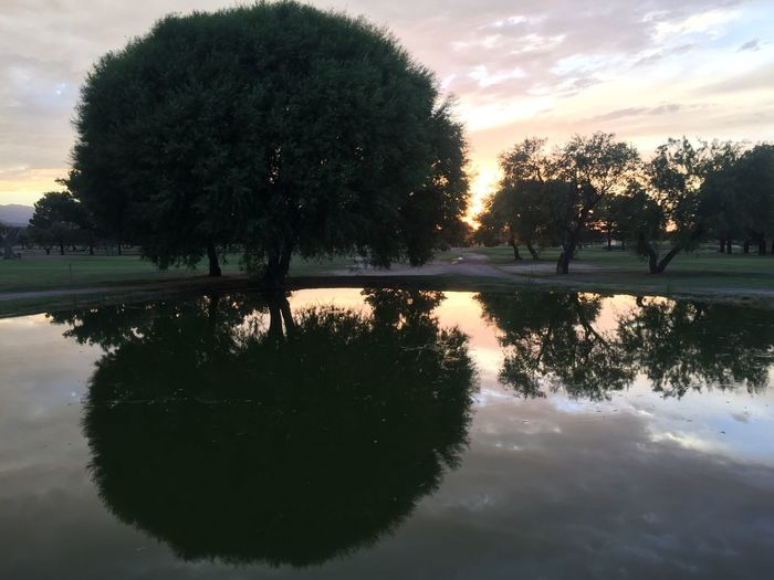 Mount Graham Municipal Golf Course at Sunset Outdoors Landscape_photography Safford Outdoor Photography Nature Photography Beauty In Nature Arizona Light Nature Beauty Reflections Reflection Lake Trees