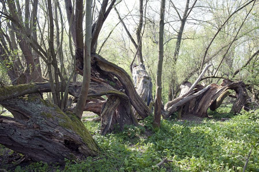 Beauty In Nature Branch Forest Nature Old Tree Tree Trunk WoodLand