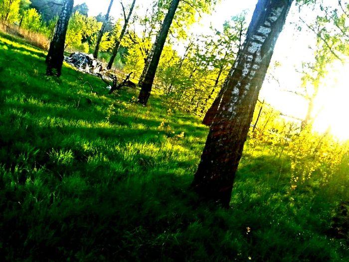 Relaxing Livenearyou Park