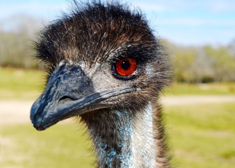 EyeEm Selects Bird Animal Day Nature Outdoors Close-up Portrait Animals In The Wild