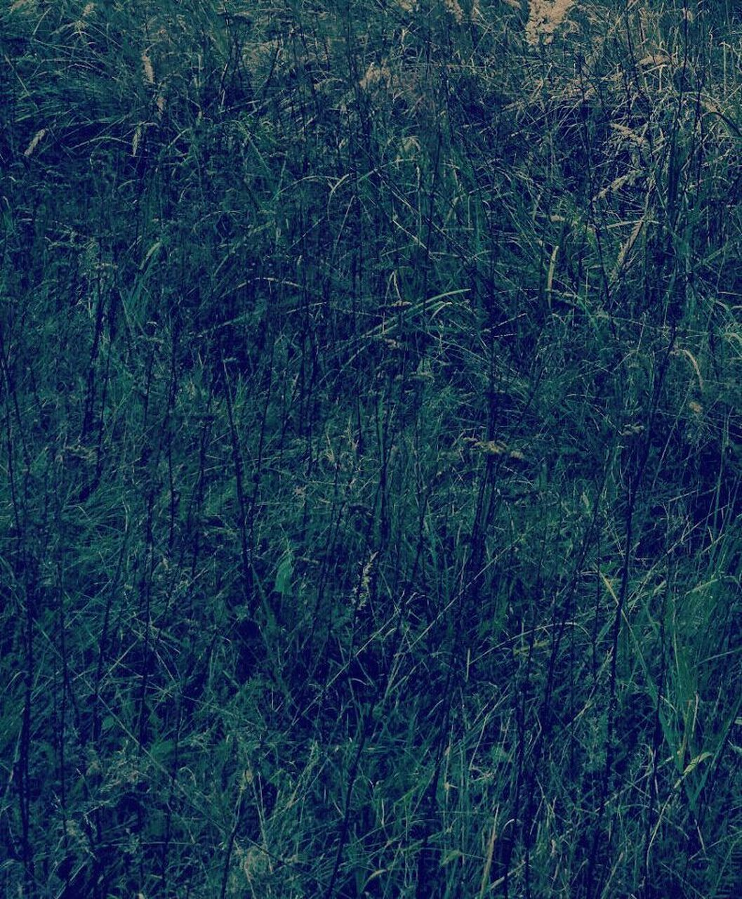 nature, forest, no people, growth, tranquility, plant, day, backgrounds, full frame, beauty in nature, grass, outdoors, tree