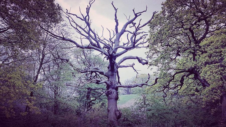 I got you, mate - trees feed their fallen companions using fungi on their roots Assist Help Companion Fallen Empathy Love Park Hampstead Heath London Tree Backgrounds Nature Close-up No People Branch Day Fragility Beauty In Nature Outdoors