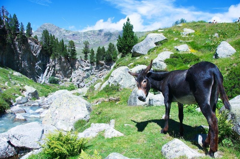 Full Length Of Donkey On Mountain Landscape