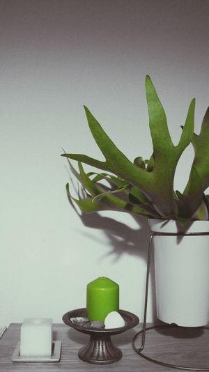 Leaf Nightphotography Night Night Plants Eyeem Plants Staghorn Fern Green