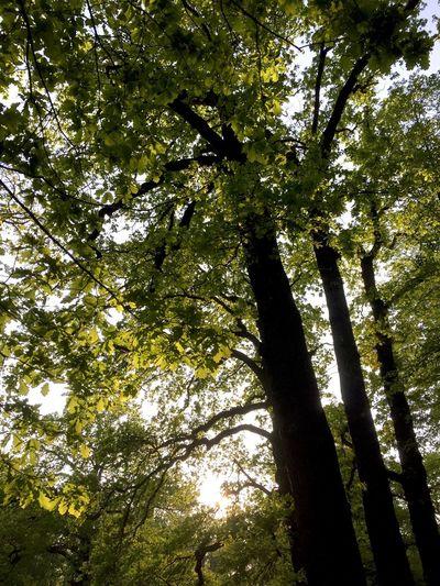 Wald,Germany