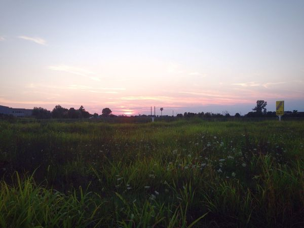 Nature Landscape Sunset Beauty In Nature Field Tranquil Scene Tranquility Outdoors Grass No People Sky Panoramic Lanatura Cielo Countryside Campagna Wildflowers Green EyeEm Best Shots