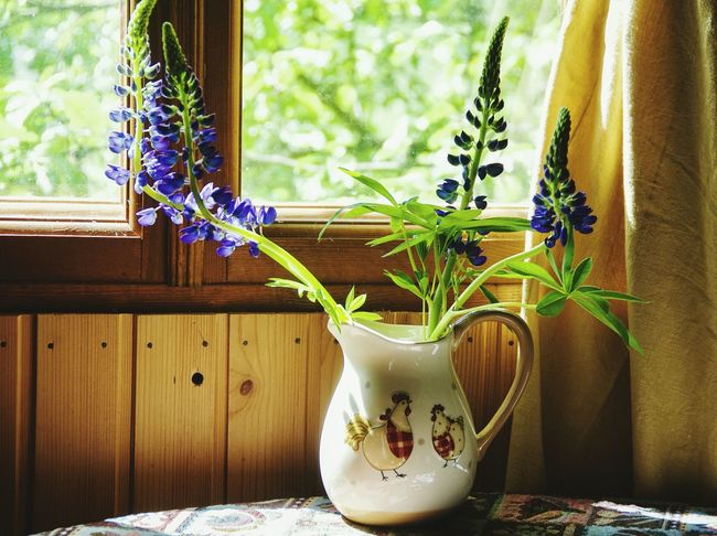 Window Home Interior Herb Fragility Flower Beauty In Nature Freshness No People Cantryside Wood - Material Vase Day Freshness Home Showcase Interior Cantry