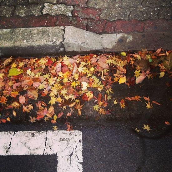 . . 빗물에 둥둥 낙엽들 일상 낙엽 가을 끝