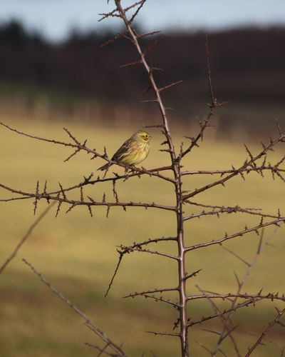 Grünfink No People Bird Close-up Nature Sky Outdoors Day Landscape Cold Temperature Nature Trees And Nature Animal Portrait