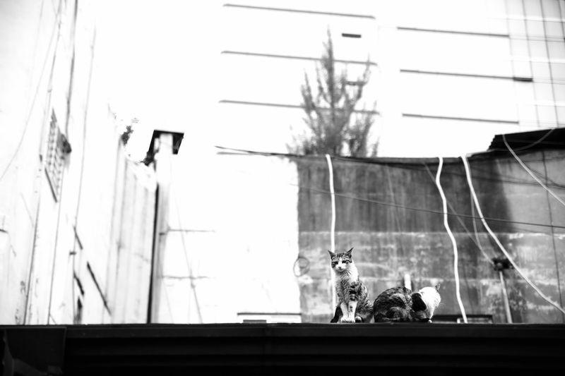 urban cat! Cat
