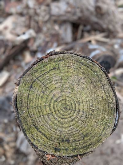 Years go by Tree Ring Concentric Close-up Tree Stump Fungus Moss