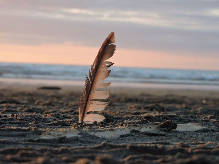 Close-up of feather at beach against sky during sunset