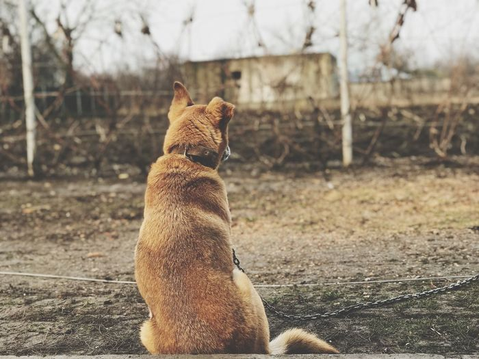 Dog EyeEm Selects Animal Themes One Animal Mammal Day No People Domestic Animals Sitting Outdoors Pets Nature