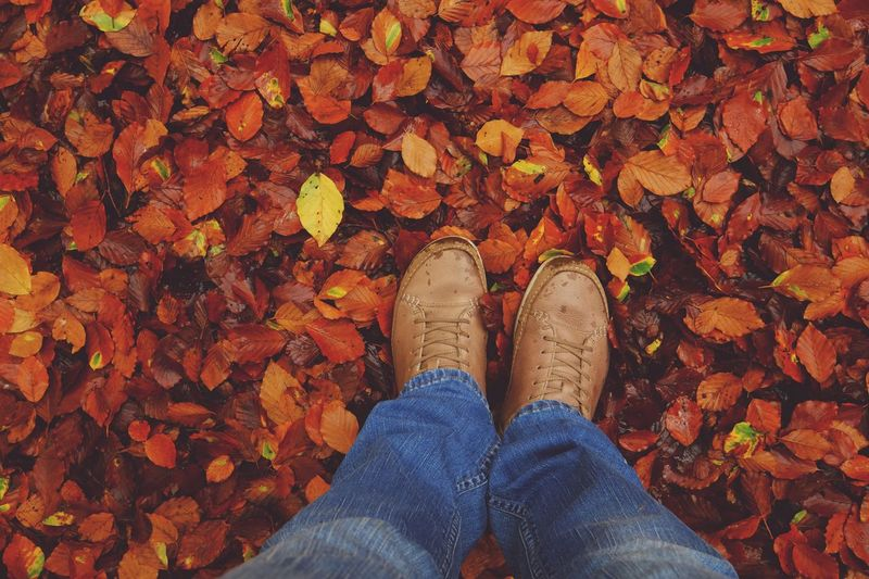 Leaf Autumn Change Shoe Leaves Dry Human Leg Personal Perspective Low Section Standing Nature Fallen One Person Real People Lifestyles Maple Leaf Outdoors Human Body Part Jeans Day