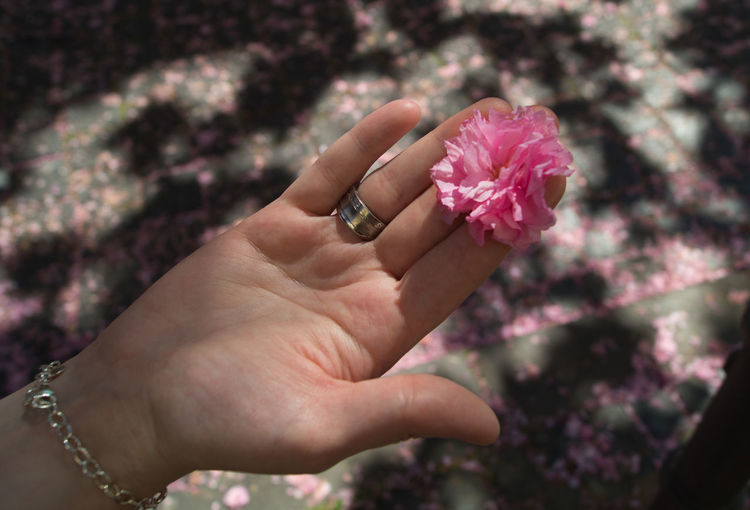 Close-up of woman hand holding pink flower outdoors